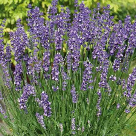 floare 12