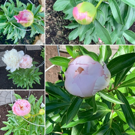 floare 5