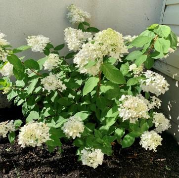 floare 9